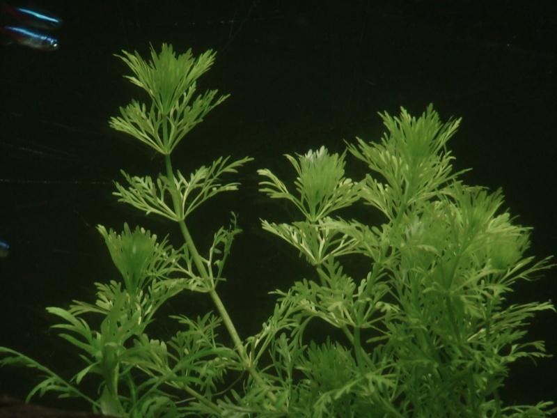 150L, Corydoras Sauvages! Aqua210