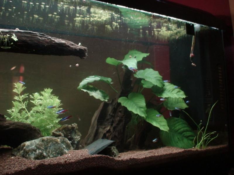 150L, Corydoras Sauvages! Aqua410