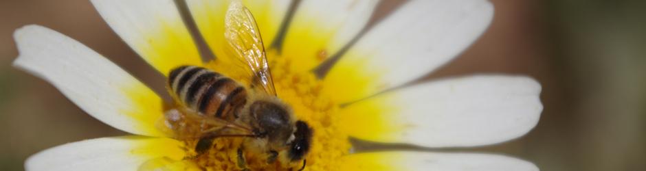 Forum apiculture..abeilles et déconne,..et....?????????