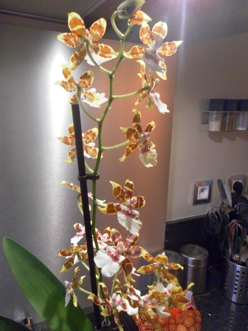 les orchidées de syljou - Page 2 Sam_8814