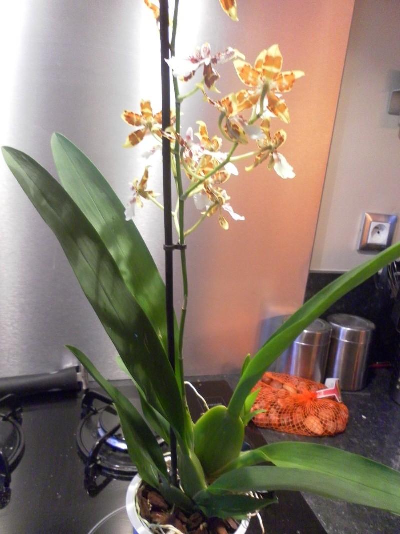les orchidées de syljou - Page 2 Sam_8815