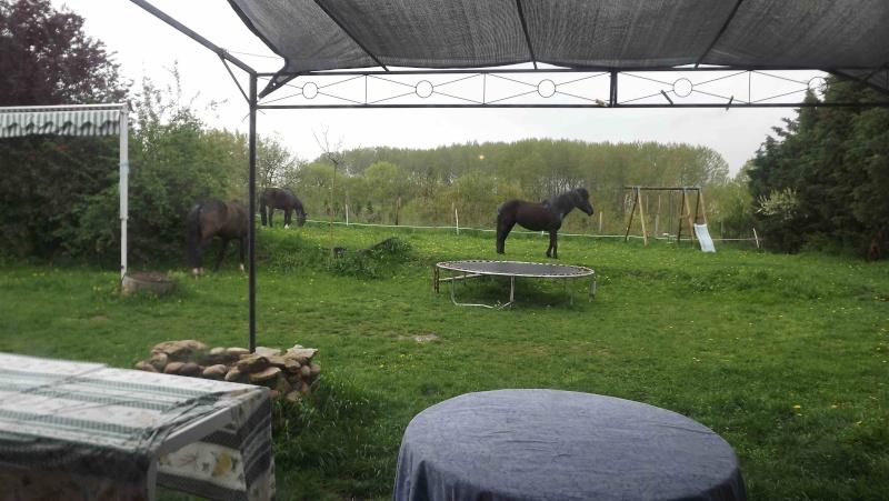 CHARLIE - ONC poney née en 1999 - adoptée en janvier 2013 par mammiemitsou - Page 2 1111