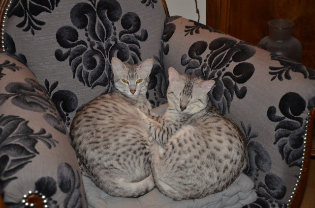 E'Sethi Accuente, le chaton voyageur - Page 10 2013_010