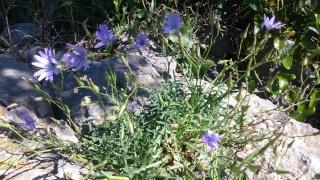 Les calanques - paysages et flore Week-204