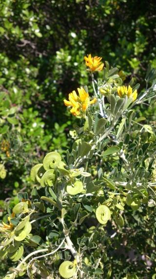 Les calanques - paysages et flore Week-205