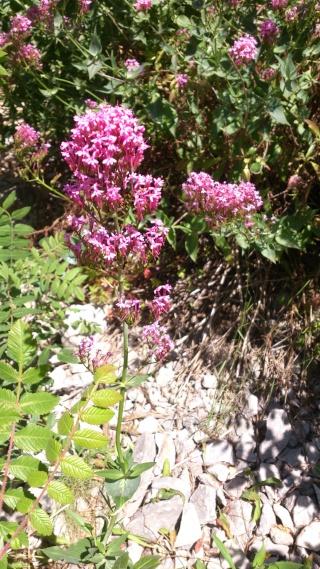 Les calanques - paysages et flore Week-207