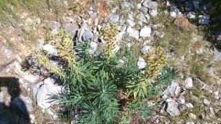 Les calanques - paysages et flore Week-208