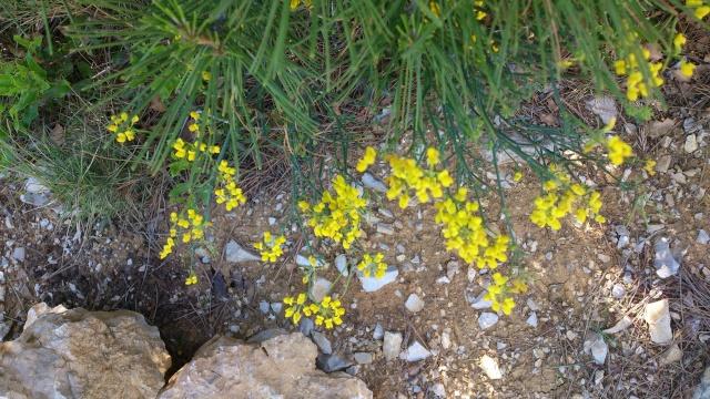 Les calanques - paysages et flore Week-209
