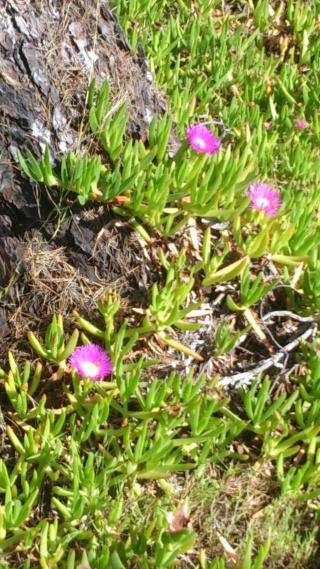 Les calanques - paysages et flore Week-214
