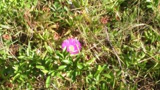 Les calanques - paysages et flore Week-215