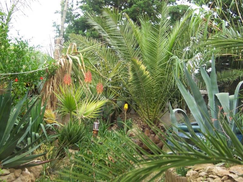 quelques photos anciennes de mon jardin avant l'invasion des pictus 100_8010