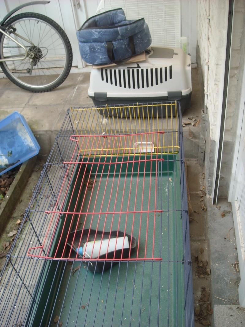Don de cage, cage transport chat et panier transport petit chien. MONS Dscn2210