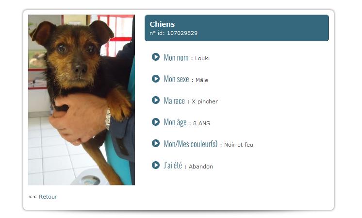Belgique : xPinscher noir et feu 8 ans mâle Xcrois10