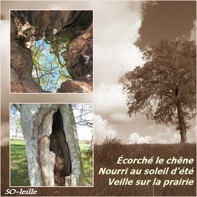 """LE BISTROT OU L'ON CAUSE  """" Aux cas faits d' la vie"""" - Page 4 Rimear10"""