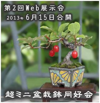 Ultra mini bonsai & bonsai pot club 2nd web exhibition    2013we13