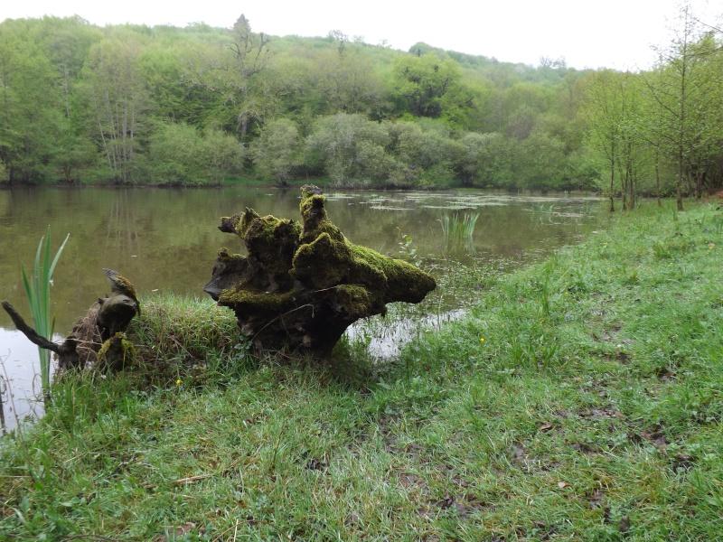petite virée en Dordogne Dscf1010