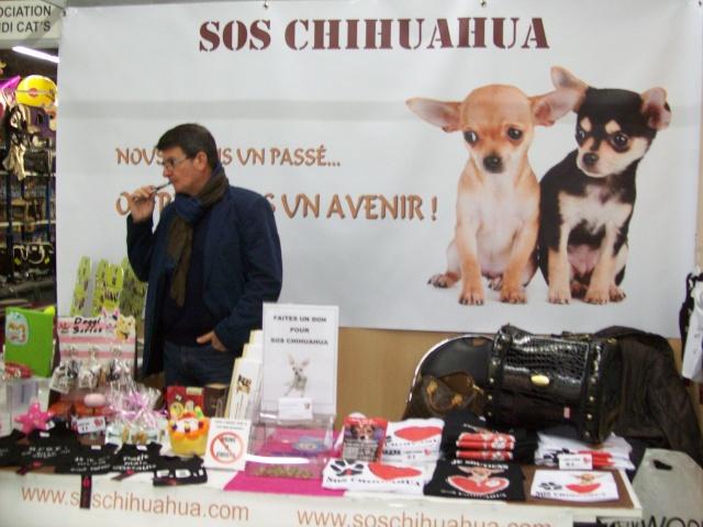 Salon chiens et chats 2013 PARIS - Page 4 100_6130
