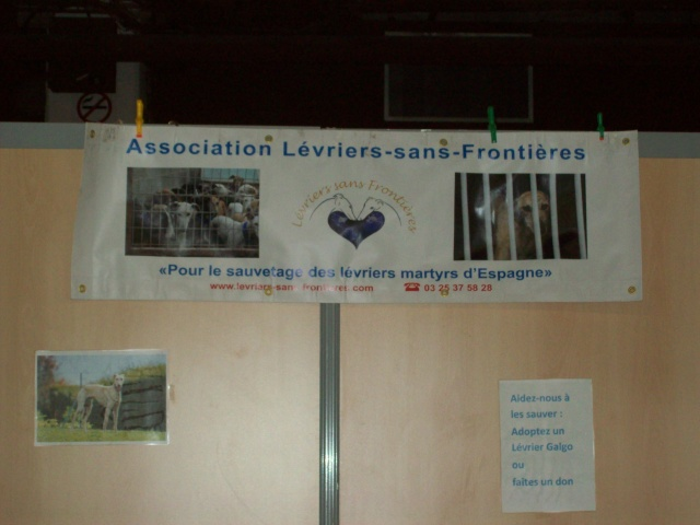 Salon chiens et chats 2013 PARIS - Page 4 100_6131