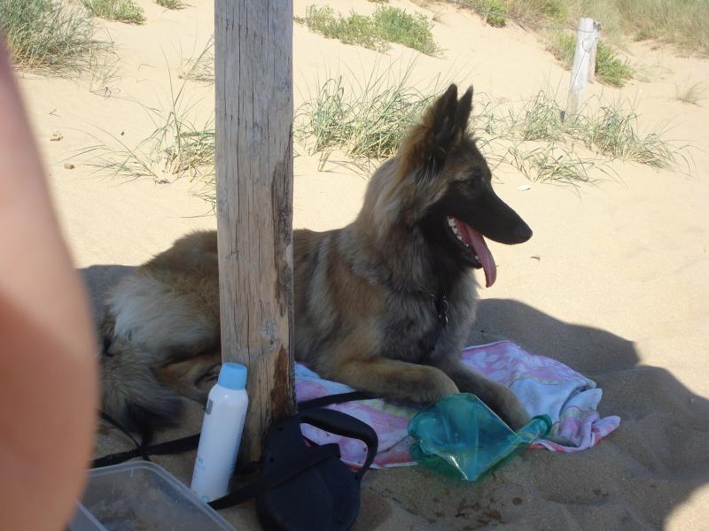 Photo de vos chiens à la plage! Dsc00710