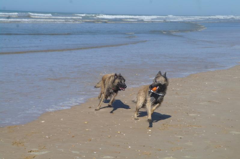 Photo de vos chiens à la plage! Sam_4510