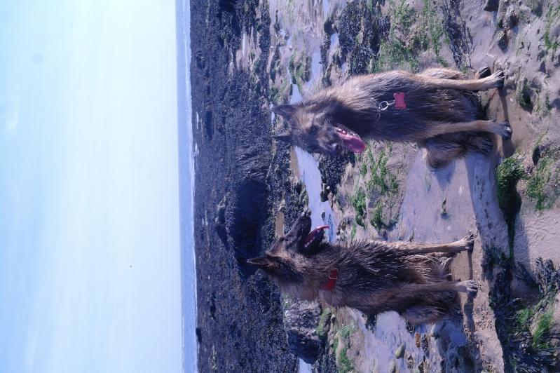 Photo de vos chiens à la plage! Sam_4511