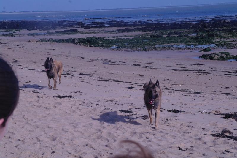 Photo de vos chiens à la plage! Sam_4610