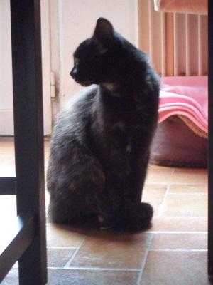 (Re)donner confiance en l'homme à un jeune chat Hanaa111