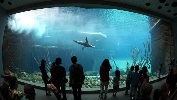 Design des delphinariums Lagune10