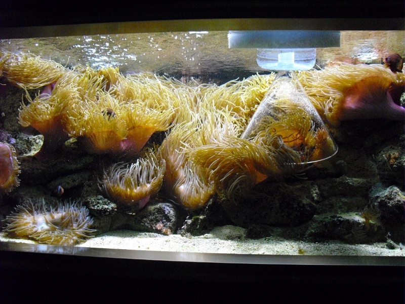 Ma visite à l'aquarium de Nancy Cimg3711