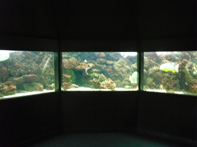 Ma visite à l'aquarium de Nancy Cimg3749