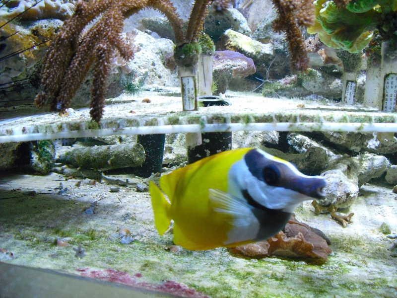 Ma visite à l'aquarium de Nancy Cimg3754