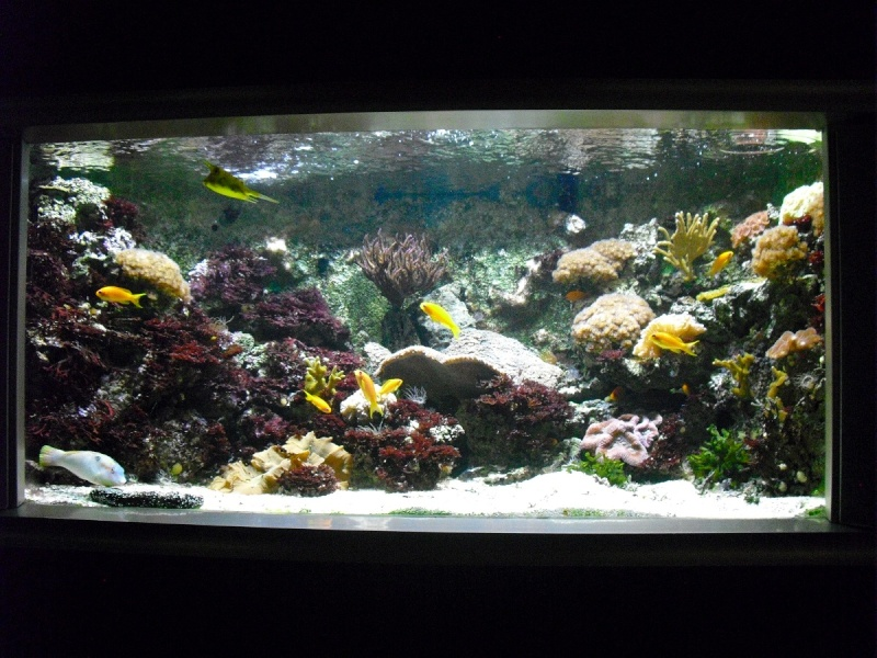 Ma visite à l'aquarium de Nancy Cimg3811