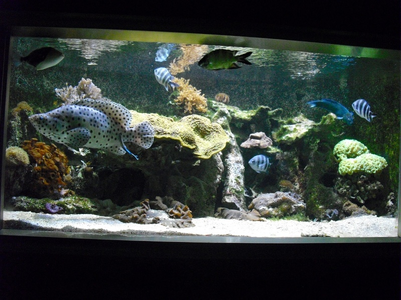 Ma visite à l'aquarium de Nancy Cimg3815