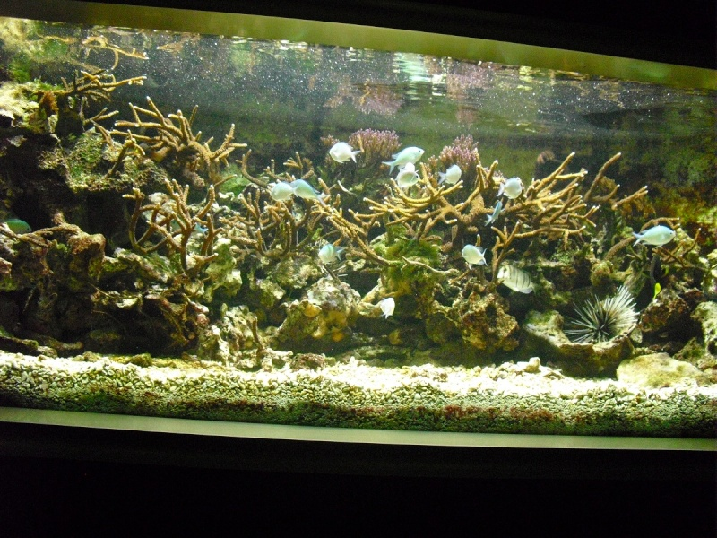 Ma visite à l'aquarium de Nancy Cimg3816