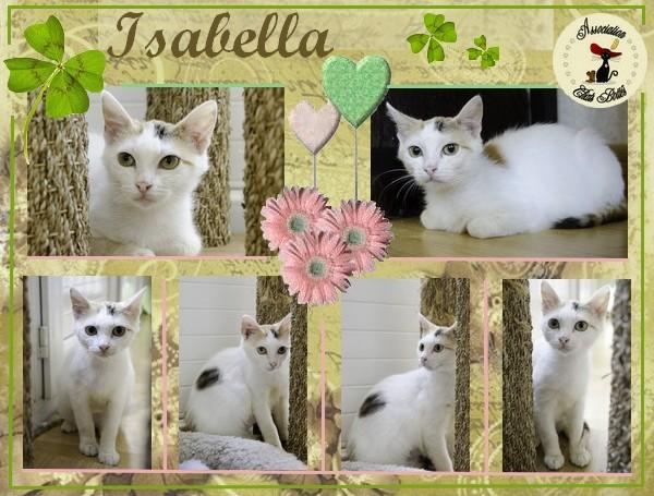 Isabella, femelle type européen tricolore née 15/01/2013 - Page 2 Affich17