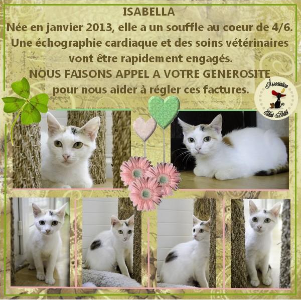 Isabella, femelle type européen tricolore née 15/01/2013 - Page 2 Affich18