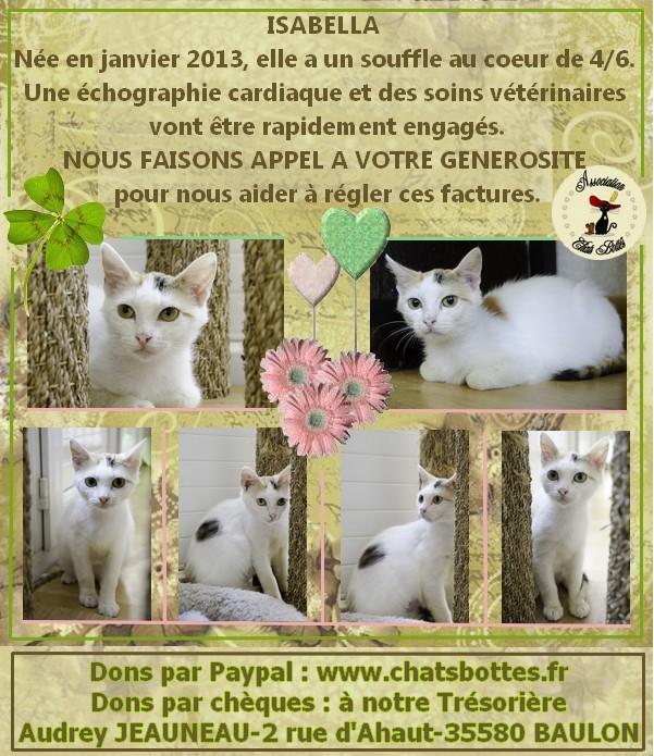 Isabella, femelle type européen tricolore née 15/01/2013 - Page 2 Affich19