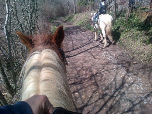 CALINOU  - ONC poney - né en 1999 - adopté en novembre 2012 par Stéphanie - Page 6 54468310