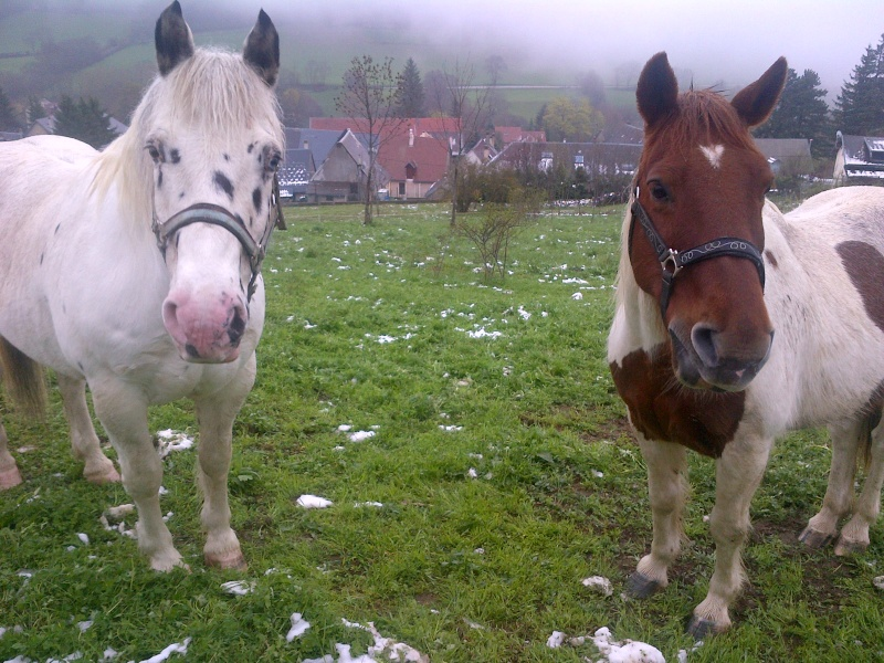 CALINOU  - ONC poney - né en 1999 - adopté en novembre 2012 par Stéphanie - Page 6 Blackb10