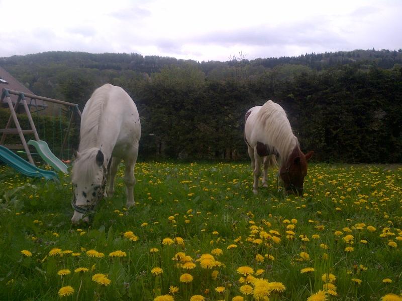 CALINOU  - ONC poney - né en 1999 - adopté en novembre 2012 par Stéphanie - Page 6 Notre-10