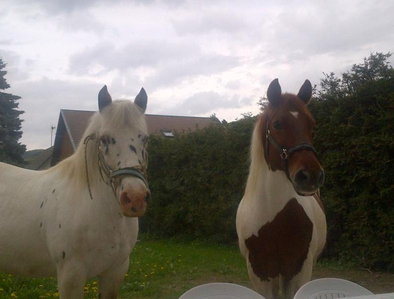CALINOU  - ONC poney - né en 1999 - adopté en novembre 2012 par Stéphanie - Page 6 Notre-11