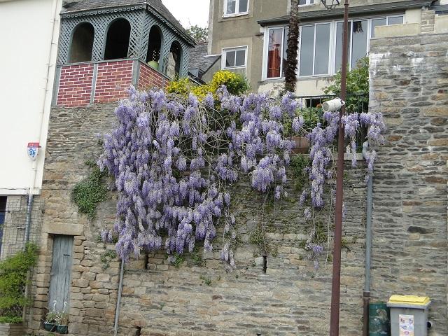 Arbres en fleurs  01110