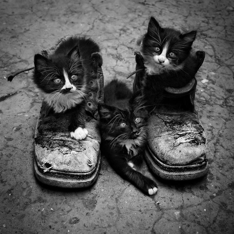 photos en noir et blanc - Page 15 11052310