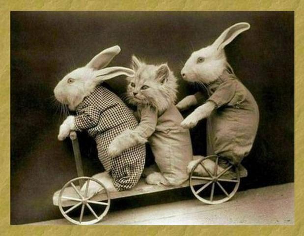 photos en noir et blanc - Page 15 Rabbit10
