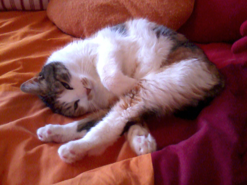 Chat alors! - Page 4 Photo013