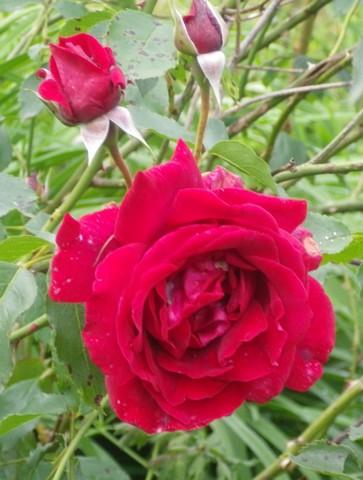 'Red Parfum' !!! 19052013