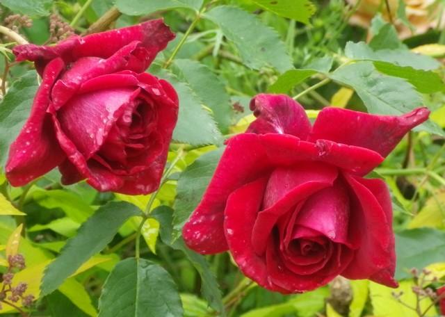 'Red Parfum' !!! 19052014