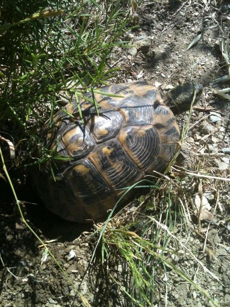 ma nouvelle tortue a pondu !!! 150610