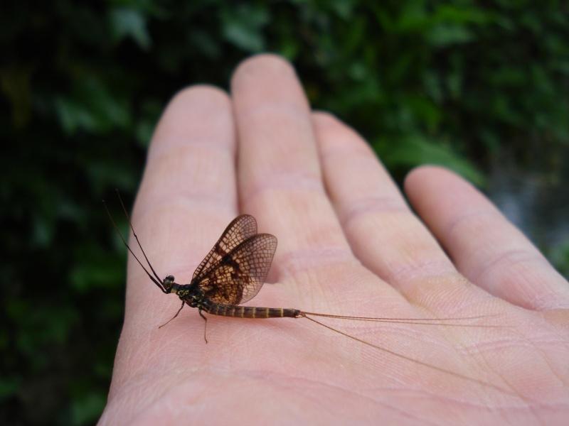 Photos d'insectes  - Page 3 Dsc01010