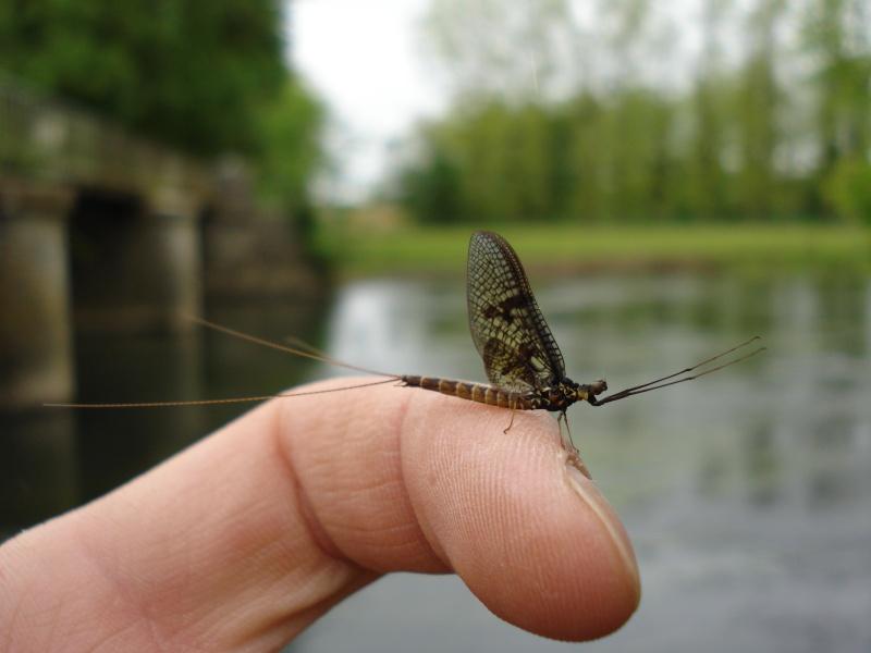 Photos d'insectes  - Page 3 Dsc01011